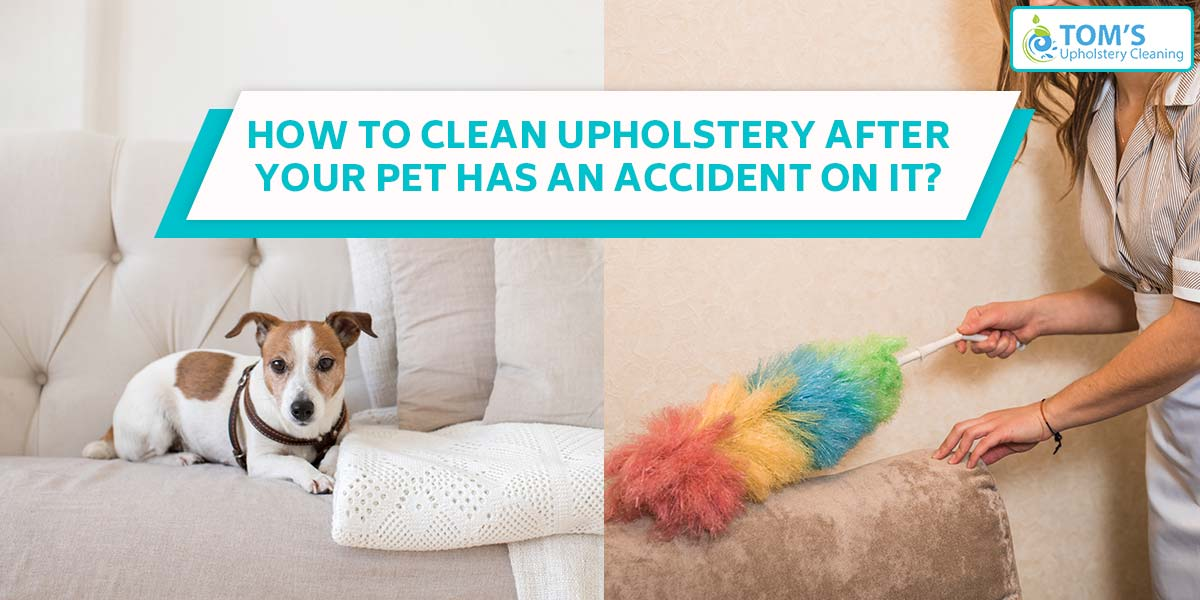How To Clean Upholstery after your pet has an accident on it?