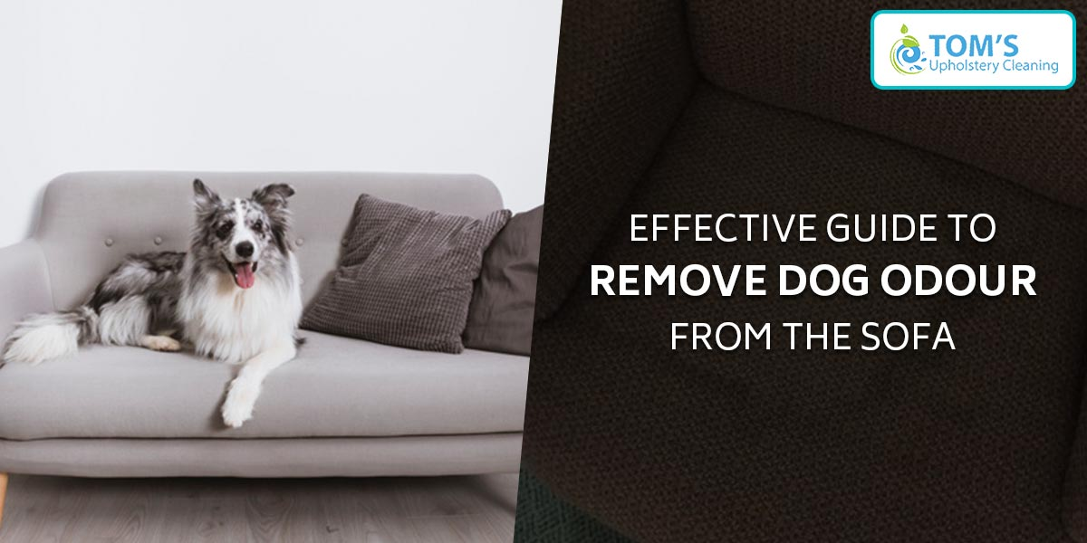 Effective Guide to Remove Dog Odour from the Sofa