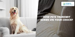 pet transmit germs on couch